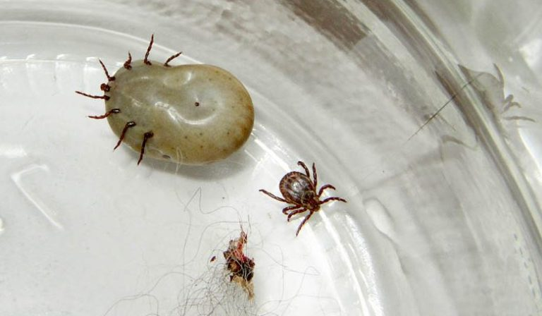 Three Things You Can Do to Stay Safe from Lyme Disease during Tick Season